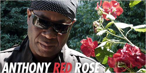 Anthony Red Rose